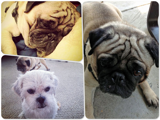 dogs_collage