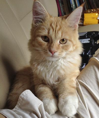 Новый котик моего брата. Я его еще не знаю, но уже очень люблю!