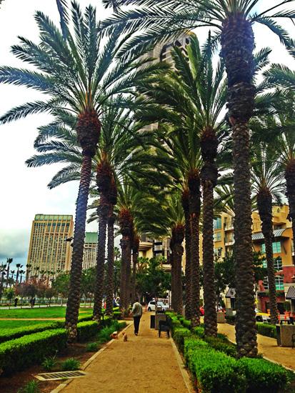 san-diego-palm-trees.jpg